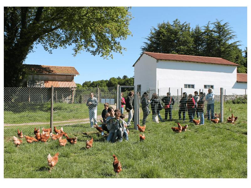 Las gallinas en libertad de Pazo de Vilane reciben visitas