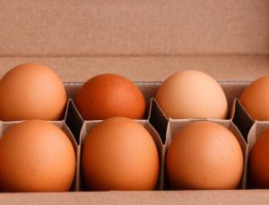 Pazo de Vilane celebra el Día Mundial del Huevo