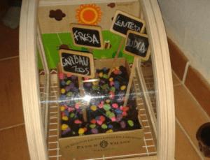 Semilleros construidos con la caja de la gallinita
