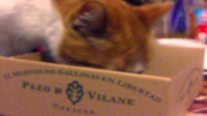 La caja de huevo campero Pazo de Vilane reutilizada como comedero de gatos