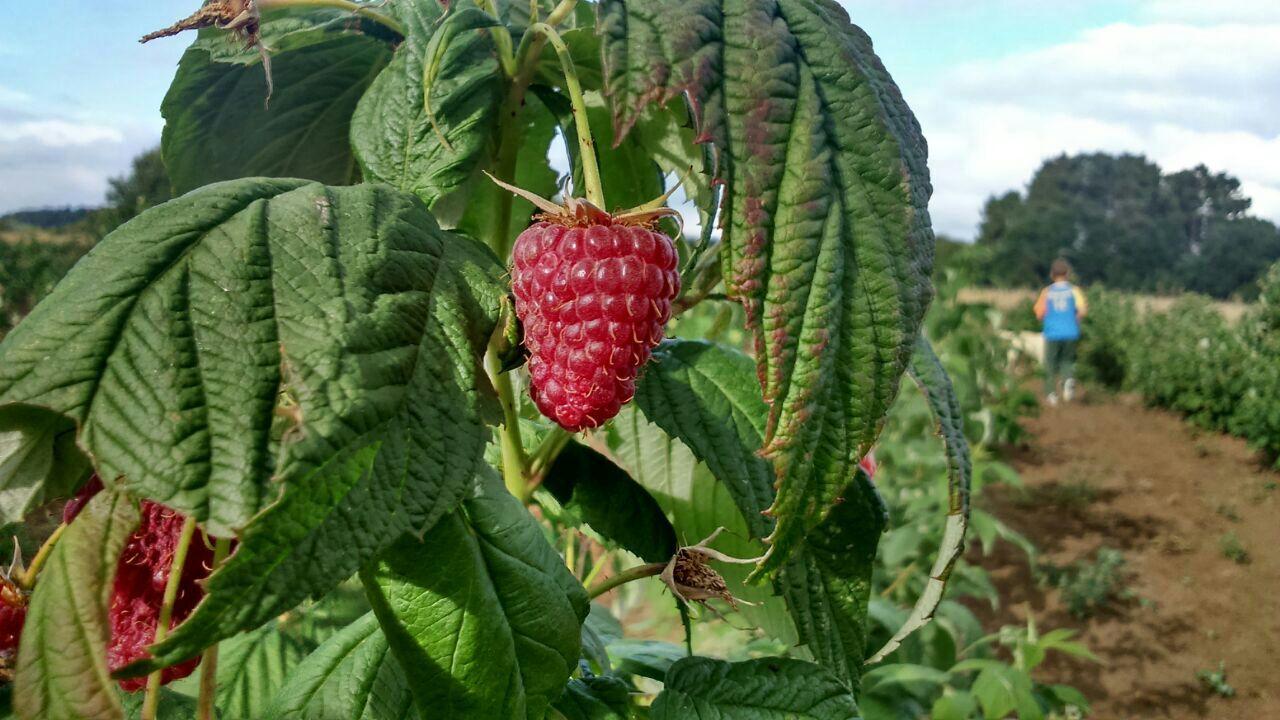 El otoño en Pazo de Vilane: tiempo de cosecha