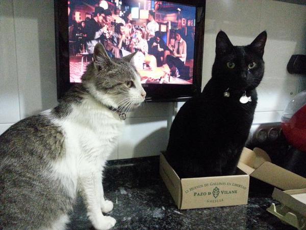 La caja de huevo campero Pazo de Vilane muy amiga de los animales