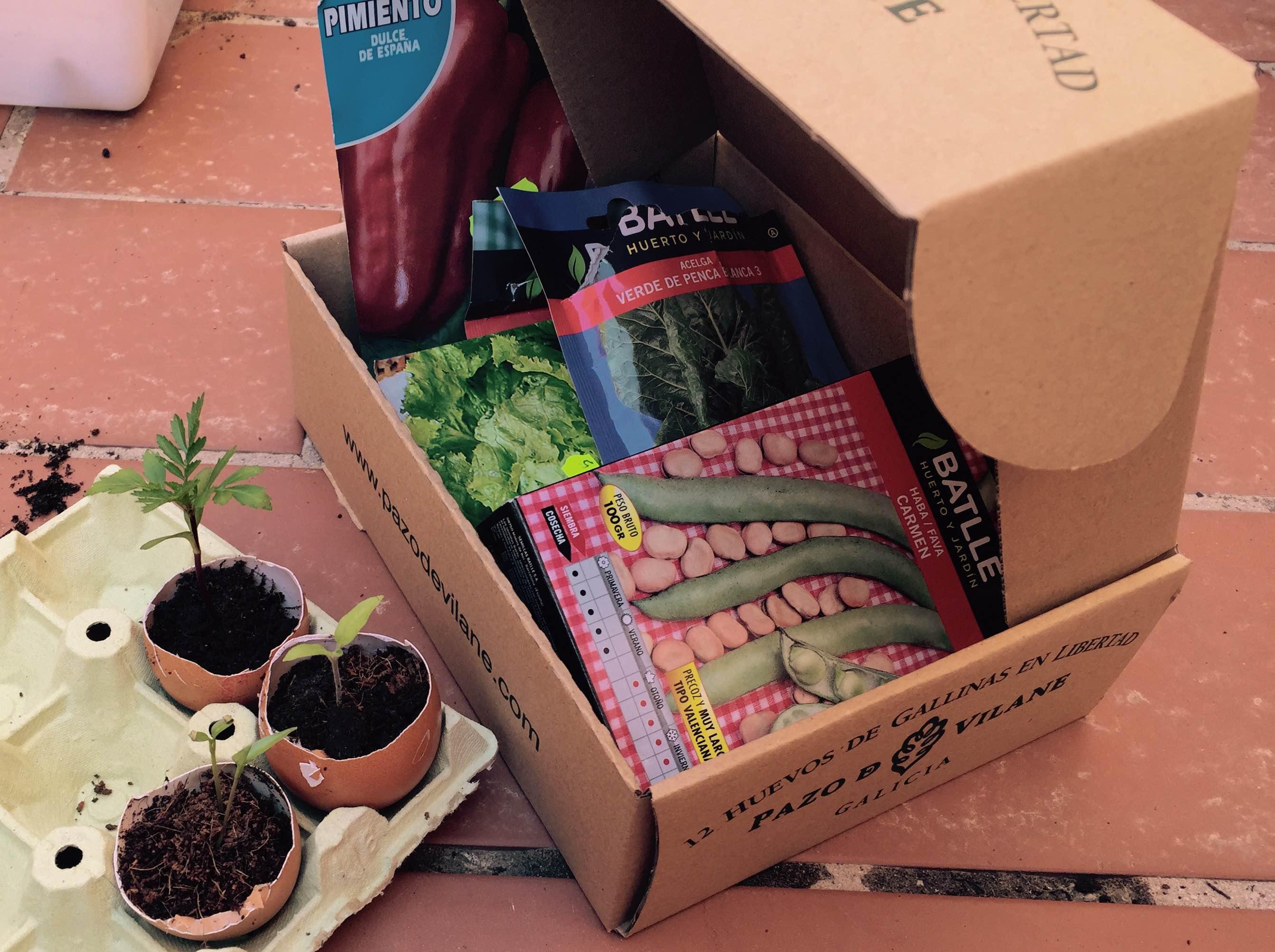 Las cáscaras y las cajas de huevos camperos Pazo de Vilane reutilizadas como semilleros