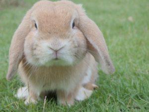 ¡Qué se escapa la coneja!