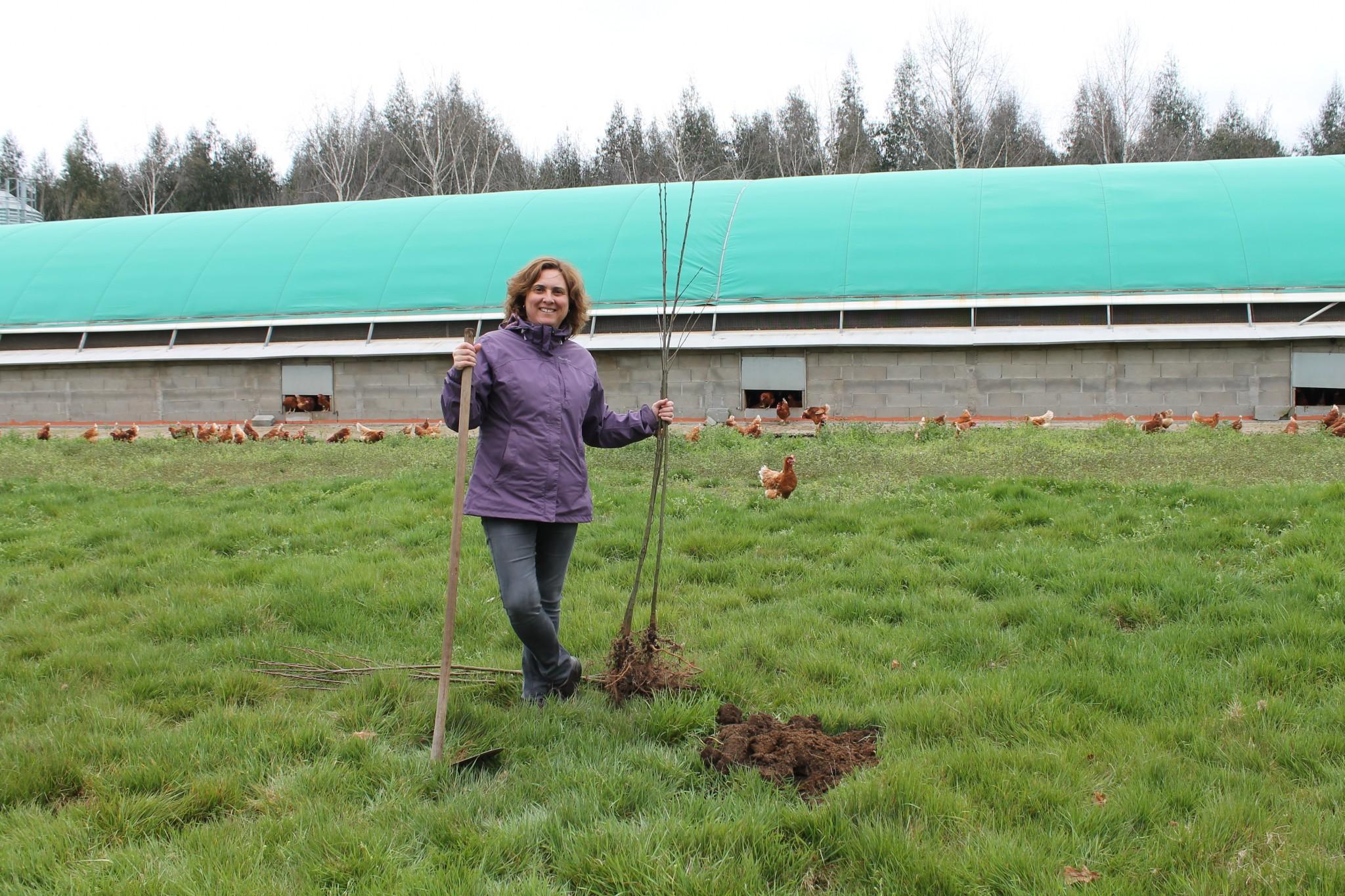 Comienza la plantación de árboles 2017