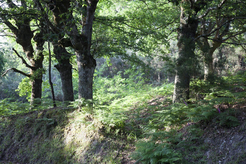 Sostenibilidad y cuidado del medioambiente, dos pilares fundamentales para Pazo de Vilane