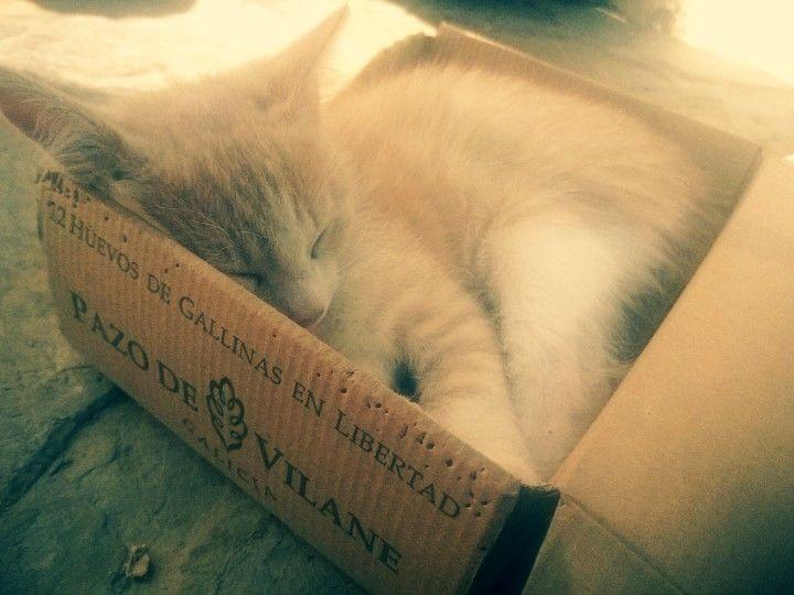 Gatos encantados con la caja de huevo campero Pazo de Vilane