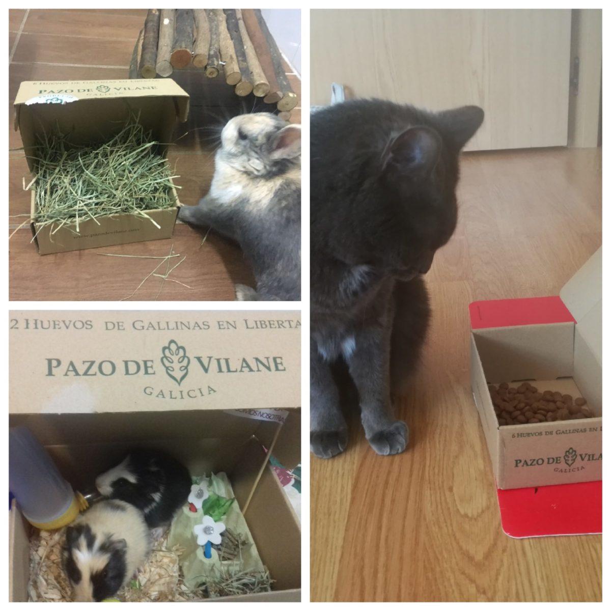 Comederos construidos con la caja de huevos camperos Pazo de Vilane