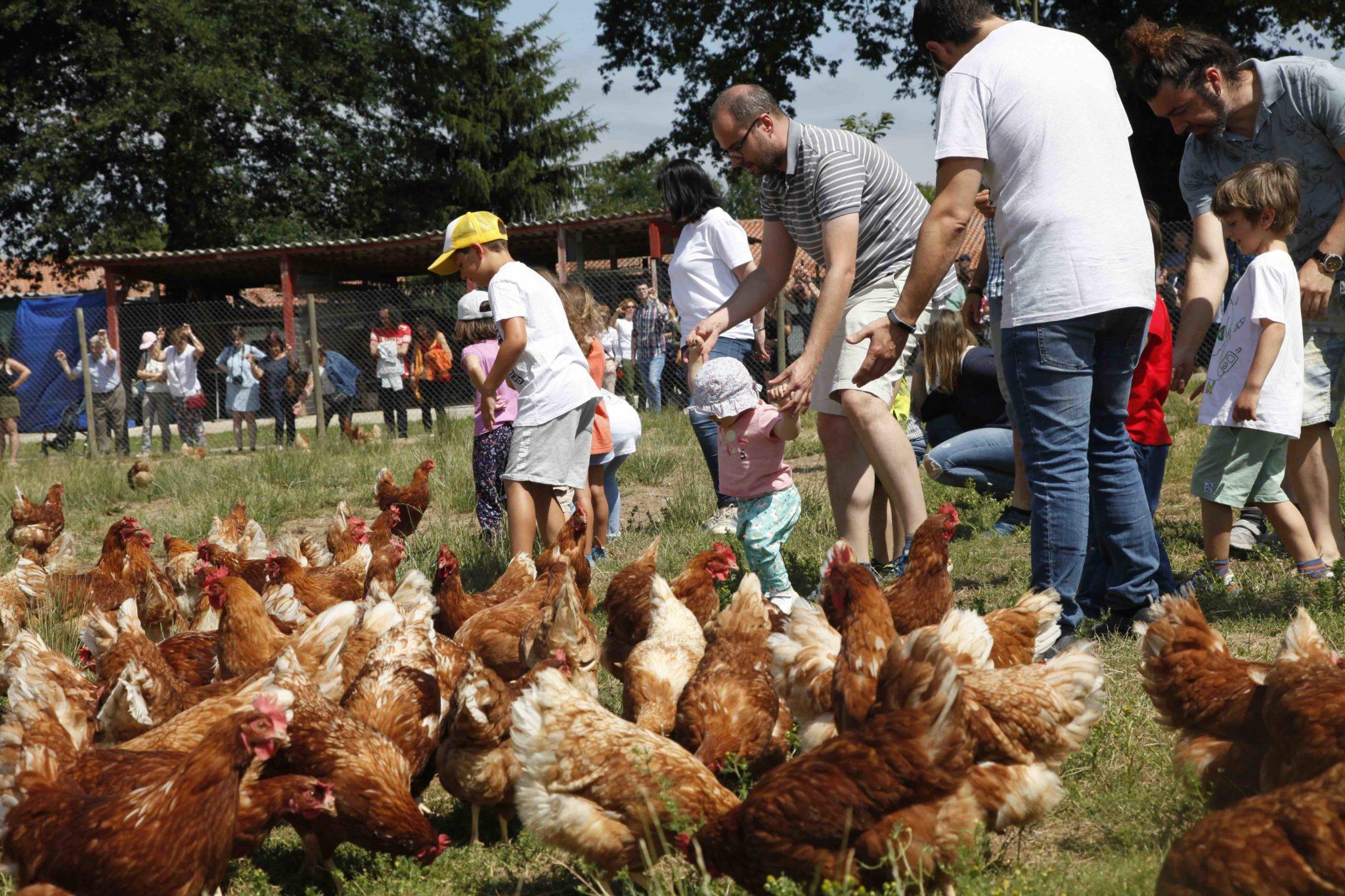 gallinas en libertad pazo de vilane