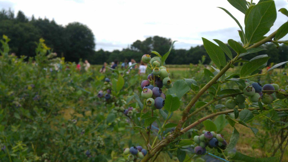 A agricultura ecolóxica: o camiño para o coidado do medio ambiente