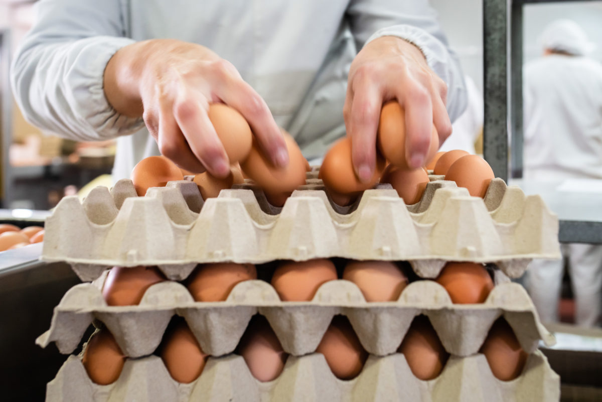 ¿Cómo cocer un huevo correctamente?