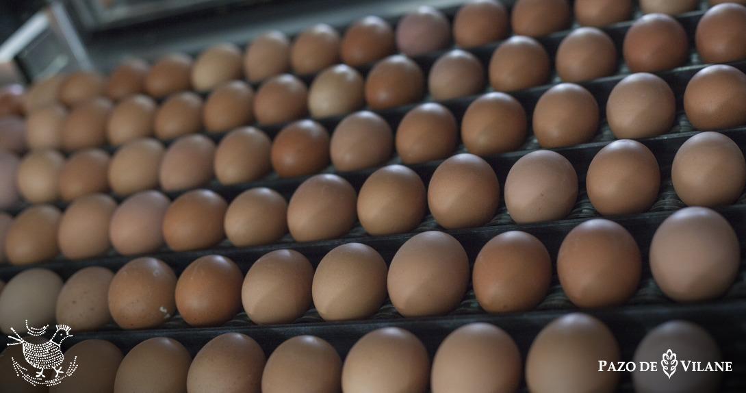 Día Mundial del Huevo: 10 características dos ovos