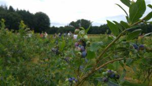 La agricultura ecológica: el camino para el cuidado del medio ambiente