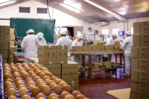 Somos referentes en el sector avícola