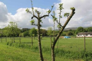 1 idea, 1 árbol: preservando la biodiversidad de A Ulloa
