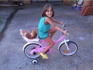 Una gallina que monta en bicicleta