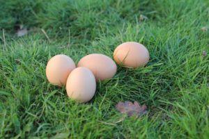 La proteína del huevo es una de las más valiosas que existe