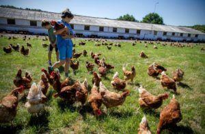 Los beneficios del huevo en la dieta del niño