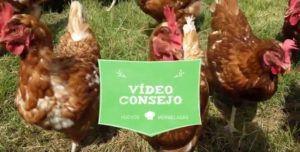 Vídeo consejo de Nuria: conservar el huevo campero