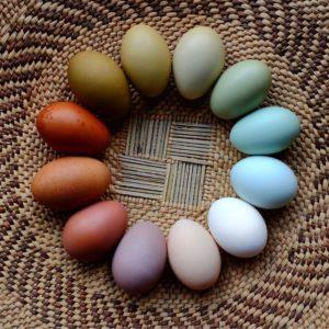 Descobre os ovos de cores
