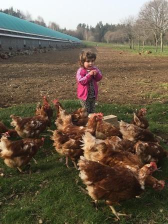 Niña con gallinas de huevos camperos en Pazo de Vilane