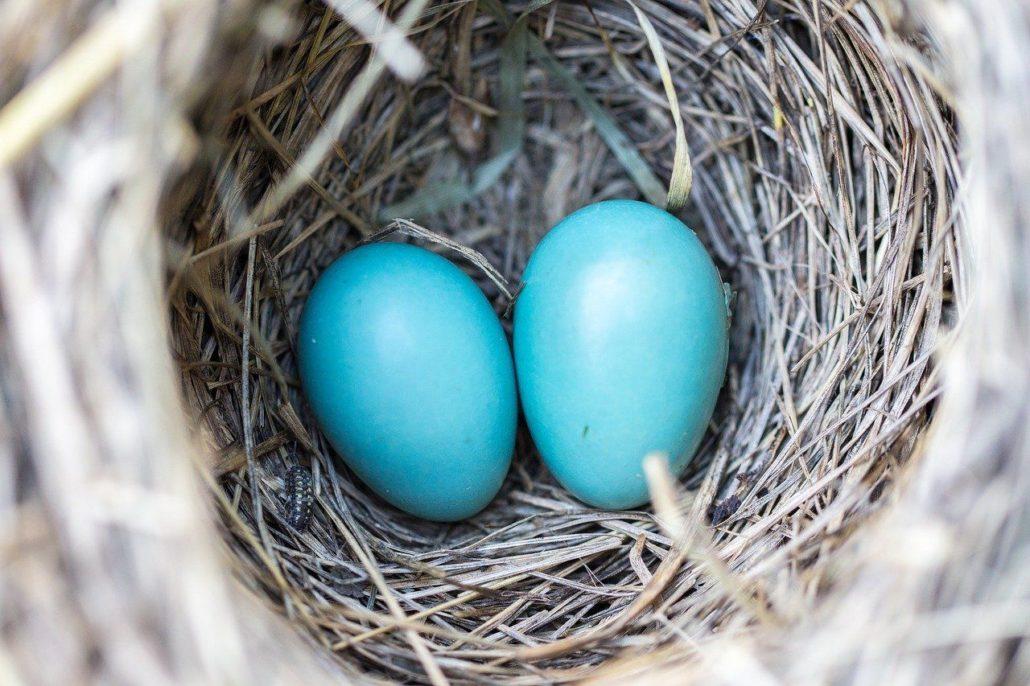 ovos azuis