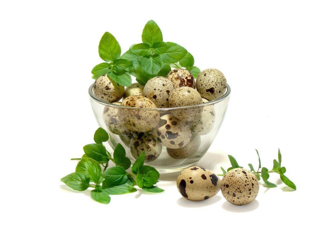 Huevos de codorniz con manchas de colores café y verdoso.