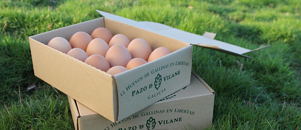 por que comprar huevos camperos