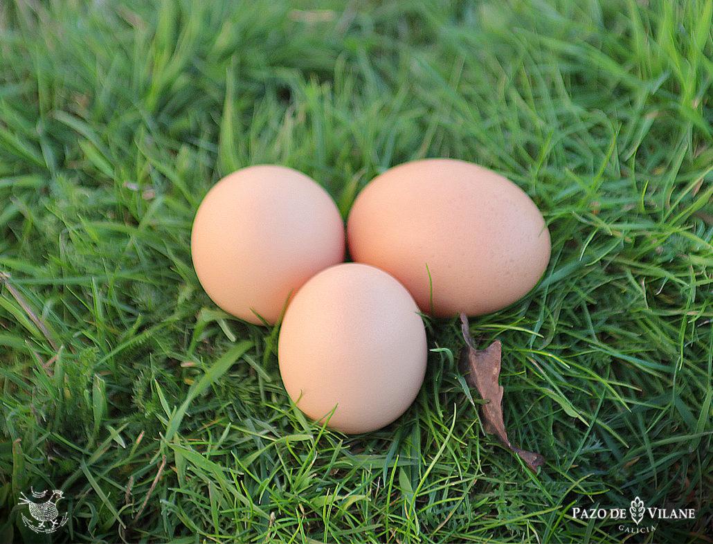 Huevos camperos en los pastos de Pazo de Vilane