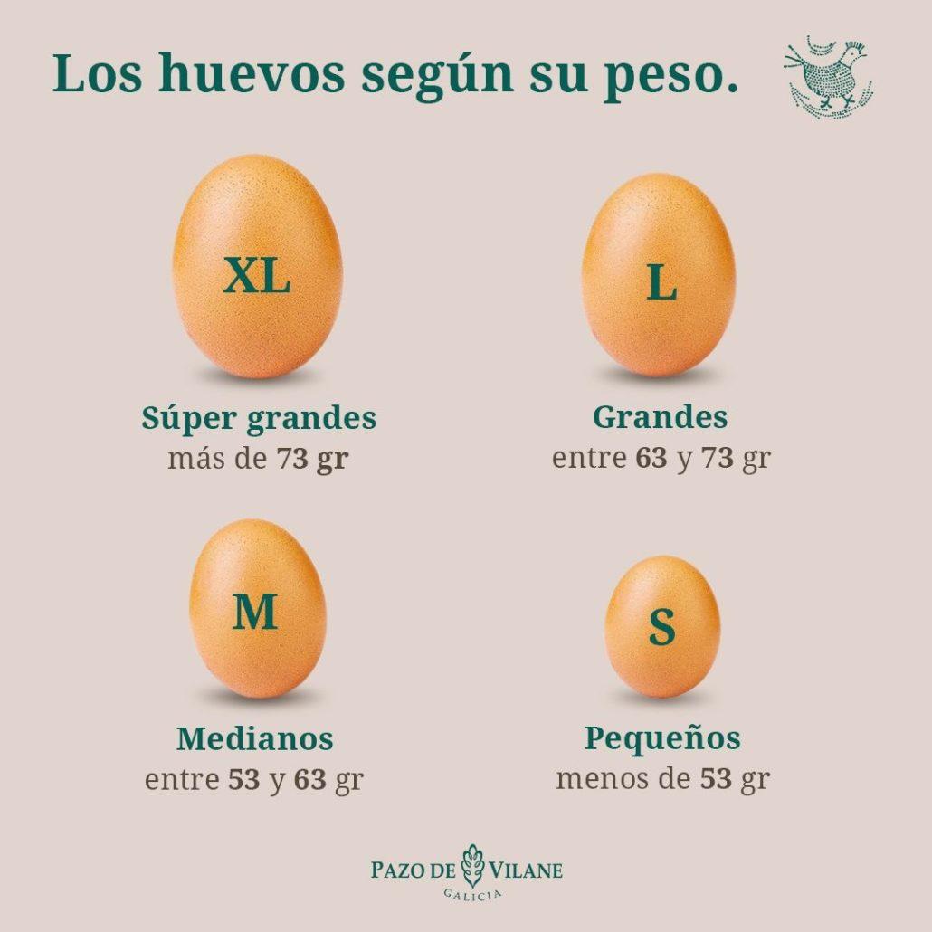 Clasificación de los huevos según su peso: súper grandes (XL), grandes (L), medianos (M) y pequeños (S).