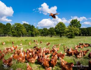 Las explotaciones avícolas