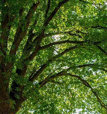 Sostenibilidad y Desarrollo natural