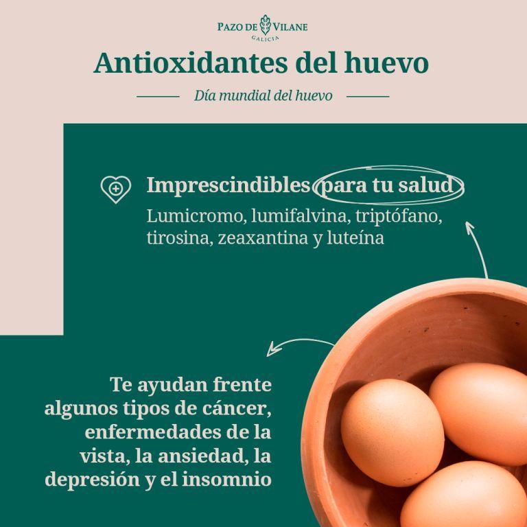 Infografía sobre los antioxidantes del huevo, importantes nutrientes.
