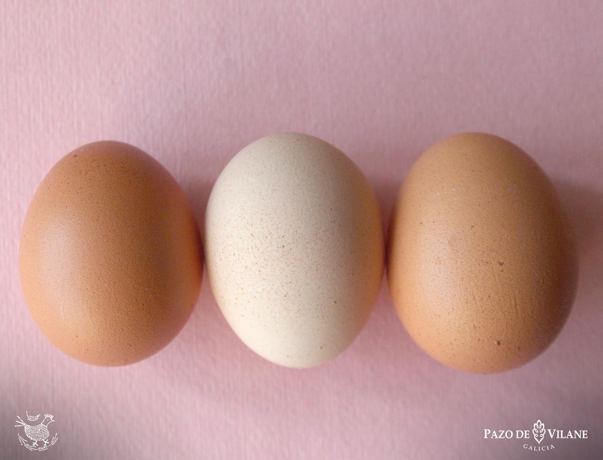 Os anticorpos no ovo