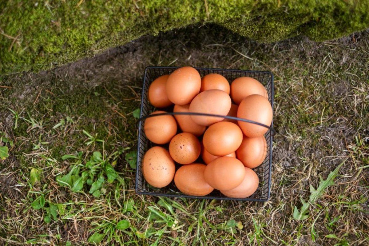 Los nutrientes del huevo