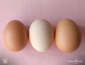Los anticuerpos en el huevo
