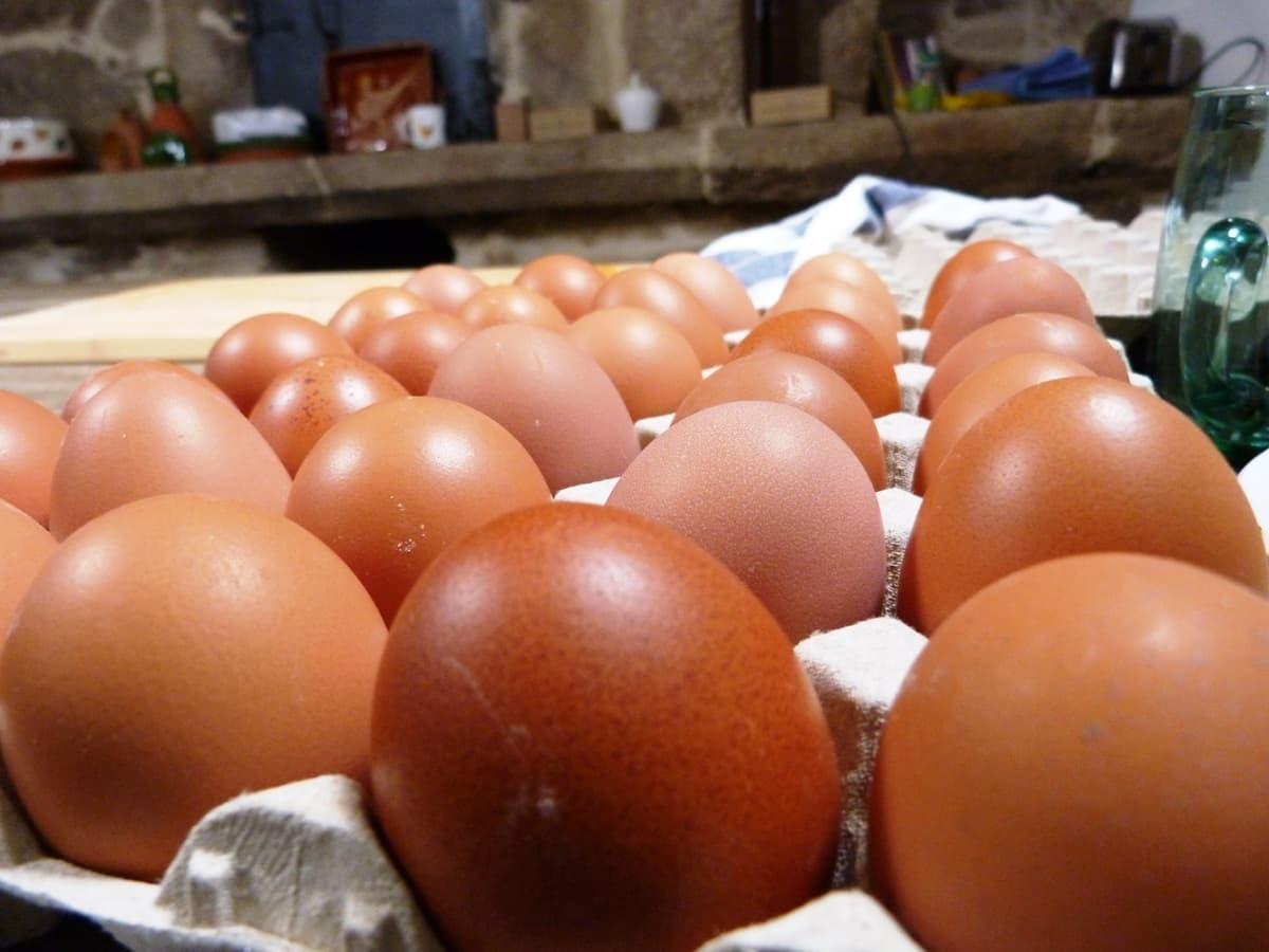 Huevos camperos sobre huevera de cartón