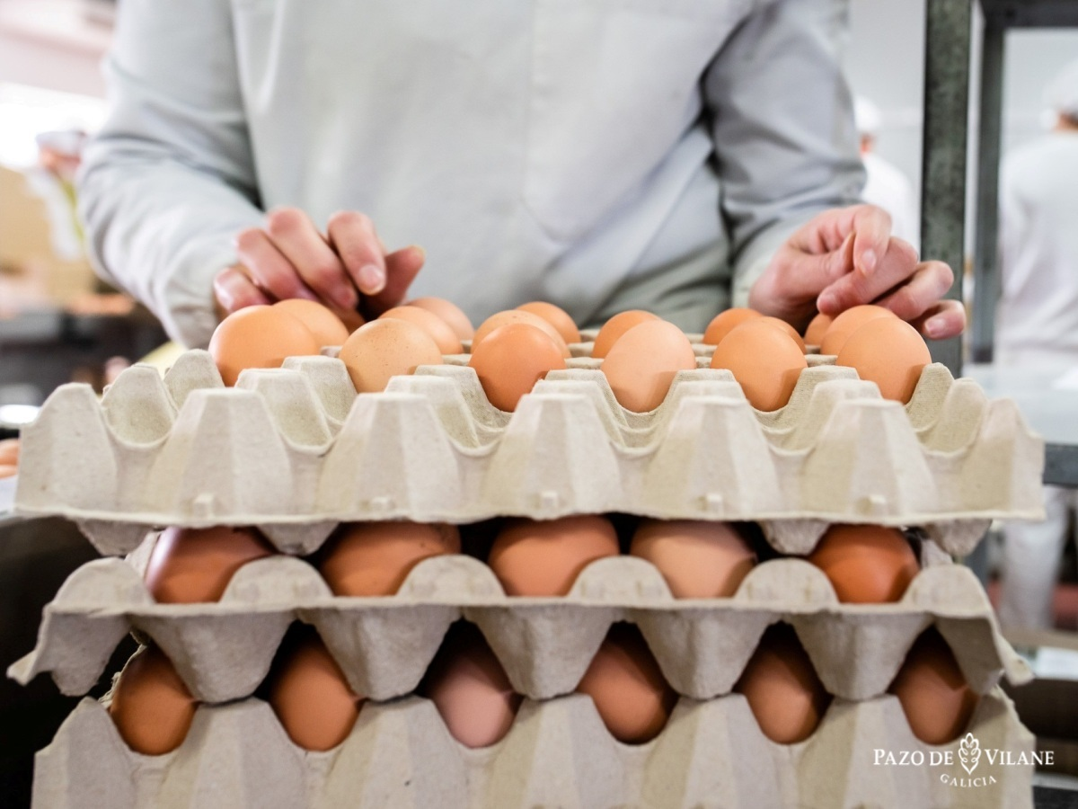 Día mundial do ovo